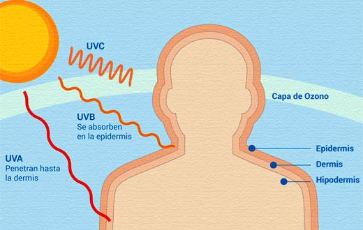 efectos que causan los esteroides en el organismo